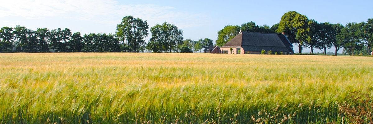 Weiland in Gelderland